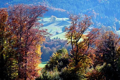 Herbstfarben (cure di marmo) Tags: bavaria bayern berge mountains pastures cows autumn sunny herbst sonnig