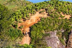 IMG_5088 (sergeysemendyaev) Tags: 2016 rio riodejaneiro brazil pedradagavea    hiking adventure best    travel nature   landscape scenery rock mountain    high forest