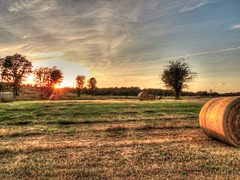 October Harvest Closes (clarkcg photography) Tags: october fall harvest sky clouds sun setting settingsun rays lastrays light evening golden goldenhour field landscape trees baretrees landscapesaturday7dwf 7dwf oklahoma sourthofmuskogee rural outdoors
