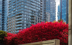 lots of grey and a bit of RED (heinz41) Tags: epl7 olympus oly25mm fall fallcolors coalharbour downtown vancouver red trees
