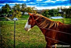 11-10-2008-16-28-48-156-01-device-2000-wm (iSuffusion) Tags: animals bardstown bloomfield d7000 horse kentucky tokina1224mm bubba nikon unitedstates us