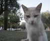 Retrato de un gato (Poet Mir) Tags: animal cat retrato gato desaturación