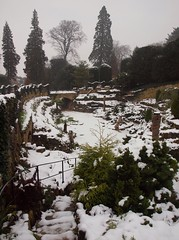 2015_01_0234 (petermit2) Tags: winter snow fern yorkshire doncaster southyorkshire englishheritage brodsworth brodsworthhall ferngarden
