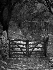 Excursio correu 0013 (Sebas Adrover) Tags: blackandwhite españa naturaleza blancoynegro nature forest canon spain mediterranean camino path powershot unesco bosque mallorca mediterráneo baleares balearicislands balearic espanya balears tramuntana illesbalears serradetramuntana esporles islasbaleares banyalbufar g15 camídescorreu