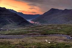 443491608276530 (duffyartola0629) Tags: travel sunset landscape island iceland nikon tramonto sheep filippo paesaggio bianchi pecore islanda seyðisfjörður