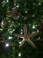 thanksgiving on the cape (studio-s) Tags: ocean thanksgiving christmas beach seashells starfish capecod massachusetts christmastree coastal
