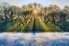 Winter Sunshine (paulinuk99999 (lback to photography at last!)) Tags: park morning trees winter grass sunrise frost december richmond gods rays 2014 paulinuk99999 sal70400g