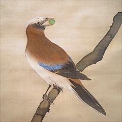 paris france japon geai rinpa artsasiatiques muséecernuschi rimpa dalbera sakaihōitsu lejaponaufildessaisons