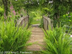 Washington DC - Kenilworth Aquatic Gardens - Bridge (etacar11) Tags: flowers gardens washingtondc bridges np kenilworthaquaticgardens kenilworthparkandaquaticgardens