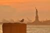 Statue of Liberty (mamue81) Tags: sunset newyork bird harbour batterypark statueofliberty statenislandferry