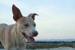 (Lucas Pedruzzi) Tags: dog co praia cane cachorro lucaspedruzzi fotoslucaspedruzzi