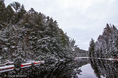 Winter Reflection (awaketoadream) Tags: park trees winter snow ontario reflection water river december canadian evergreen algonquin shield wilderness madawaska provincial