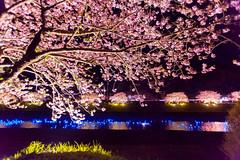 DS7_2661.jpg (d3_plus) Tags: street sea sky plant flower nature car rain japan drive spring scenery cloudy wideangle rainy  cherryblossom  sakura   shizuoka    touring  izu  kawasaki  superwideangle  kawazu          a05  kawazuzakura  1735mmf284 tamronspaf1735mmf284dildasphericalif tamronspaf1735mmf284dildaspherical d700   nikond700 tamronspaf1735mmf284dild tamronspaf1735mmf284 kawazucherryblossom  tamronspaf1735mmf284dildasphericalifmodela05