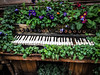 piano (Mohmed Althani) Tags: wood travel flowers cold flower color tree green london love colors catchycolors photo exposure central doha qatar frined greatshots topshots photosandcalendar flowerwatcher iphone6 flickrportal