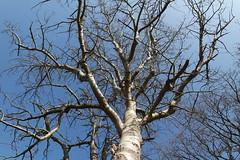 NX3000 Tree and blue sky (Michael Schnborn) Tags: flowers sky plant flower tree samsung bluesky resolution nx nx3000 nx1650mmf3556powerzoom