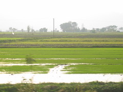 Rice Paddies in Burmese Hills