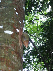 Snail Up the Tree