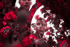 The Hall Of Broken Mirrors (Elliot Tratt) Tags: red roses portrait plants plant nature canon reflections eos mirror natural mirrors reflect portraiture 5d concept conceptual unnatural 5dm2 5dmark2