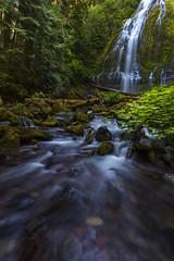 Proxy Falls (McKenzie Bridge, OR) (Sveta Imnadze.) Tags: oregon creek proxyfalls summser sisterswilderness