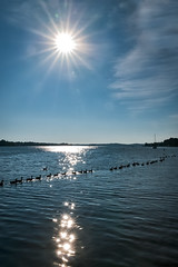 Spring 2016 (65 of 1) (MP-240) Tags: chesapeake sailing duck sunstar leica magothy river annapolis maryland nature summer sunrise