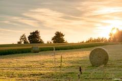 09072016-_DSC0167 (vidjanma) Tags: paysage soir boules foin