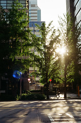 48190010 (dariyasalauyova) Tags: trees sunlight green film 35mm minolta minoltax700 korea seoul analogue  filmphoto