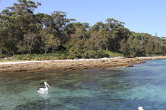 Murray's Beach (ABC Open South Coast and Tablelands) Tags: bay jervis