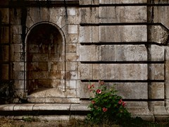 Wall (Nicolas -) Tags: paris france wall flower mur fleur niche stone pierre tourism tourisme mood ambiance nicolasthomas lignes lines outdoor exterior balade walk extrieur bridge pont architecture building angles composition weathered us