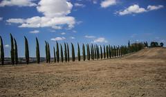 Cipressi (jazz_0902) Tags: clouds countryside campaign cipressi valdorcia sky skyline street strada tuscan tuscany trees toscana travel thestreet italy pienza