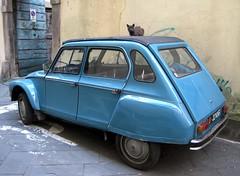 4479 (bluefootedbooby) Tags: automobile car voiture carro dyane citroen gatto cat chat gato azzurro