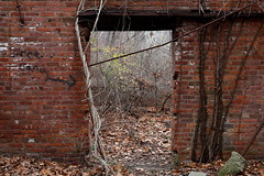 Free Candy (95wombat) Tags: coldspring newyork westpointfoundry industrial decay ruin bricks weeds