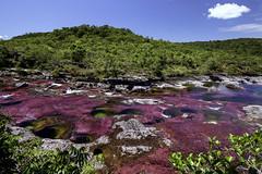 Martian Viewpoint (creyesk) Tags: caocristales meta colombia travel noon colorful river red magenta bluesky cieloazul riodecolores algas algea mirador