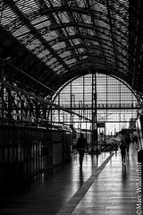 Frankfurt Hauptbanhof - black and white (Marc Wildenhof) Tags: frankfurtammain hessen deutschland de hauptbahnhof schwarzweis bahnhof stahl canoneos7dmarkii