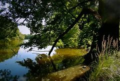 Lake Amtssee (Caledoniafan (Astrid)) Tags: caledoniafan nikon nikoncoolpixl820 nikoncoolpix landscape landschaft lake see water wasser wald forest nature natur summer sommer reflections reflektion spiegelung brandenburg amtssee