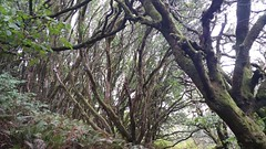 Mount Tamalpais: Rock Spring to Stinson Beach Hike (45) (Planet Q) Tags: mttam marinheadlands