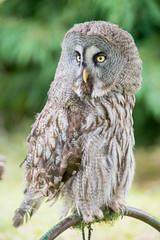 _ATI4884 (Aitzol Arruabarrena) Tags: cabarceno d800 tokina 300 animals animaliak