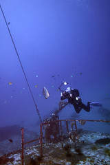 FLA-161001-ND800-8183 (ferlopez) Tags: batfish fish longfinbatfish marinelife plataxteira spadefish underwaterphotography wailea mauihawaii usa