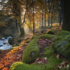 Hazy shade of Autumn (fearghal breathnach) Tags: autumn squareformat square landscape haze manorkilbride wicklow wicklowmountains sunset sunrays sun closeup leaves autumntones forest woods 5d canoneos5dmarkiii wideangle ef1635mmf4lisusm
