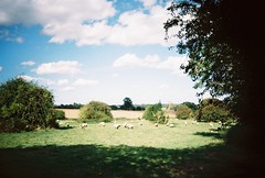 OT500 - Warwickshire Countryside (johnnytakespictures) Tags: olympus trip500 film analogue automatic kodak colorplus200 expired warwickshire coventy canal river stream towpath walk summer sun sunshire sheep field countryside animals nature natural lifestock