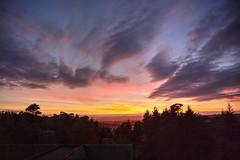 Cloak of Night  19/31 (rmrayner) Tags: dartmoorsunset dusk forest trees devon octoberchallenge amonthin31pictures aphotoadayforamonth