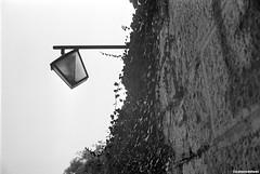 0010 (coloredsteel) Tags: leica m6 voigtlnder nokton classic 35mm f14 kodak trix 400 rodinal black white bw home developed 1100 ulm graffiti street photography colored steel coloredsteel trainspotting trainwriting