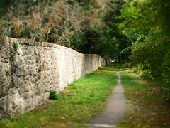 Hinter der Mauer (1elf12) Tags: grn green goslar germany deutschland gethsemanekloster gutriechenberg mauer wall pfad path weg