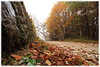 Fallen leaves / Foglie cadute (daril77) Tags: cengio montecengio cogollo veneto vicenza italia italy valdastico altipiano asiago canon eos eos7d 7d