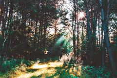 (m.majphoto) Tags: forest sunrise woods landscape sunlight sunrays sunray morning earlymorning