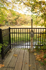 deckareabbr (catherinehodges) Tags: nature fall autumn october massachusetts cambridge unitedstates trees foliage water watertown charlesriver