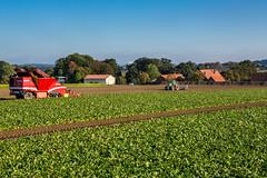 Gegenverkehr (Fotos aus OWL) Tags: roden zuckerrüben rüben grimme maxtron fendt landwirtschaft