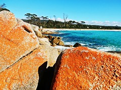 Rock formations in Bay of fires - Tasmania - Australia (pacoalfonso) Tags: pacoalfonsocom travel australia tasmania rock formation bay fires beach landscape