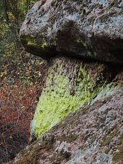 Lime Green Lichen at Pinnacles (Craigs Travels) Tags: lichen moss pinnacles nationalpark