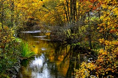 _DSC7344 (andoni.guridi) Tags: autumn fall spain otoño navarra 2014 basaburua