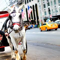 New York cabbie and horse carriage. (darinkimphotography) Tags: street newyork fall bokeh centralpark taxi 2014 horsecarriage